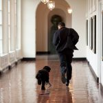 Fotos de Obama com seu cachorro na Casa Branca